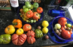 Image of a countertop full of tomatoes and cucumbers of various colors and ripeness. All harvested from Crystal's garden.